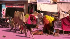 Cleaning up after Holi festival in Indian village Stock Footage