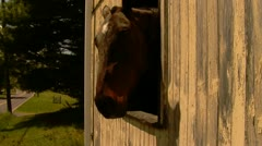 Horse Sticks Head Out of Barn Window Stock Footage