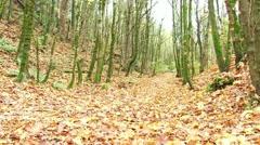 Beautiful Autumn Forest Pan Shot Stock Footage
