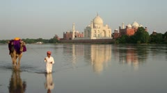 Camel in river, Taj Mahal, Agra, India Stock Footage
