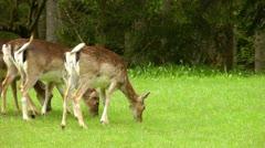 Deer grazing in bavaria germany Stock Footage