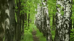 Spring footpath Stock Footage