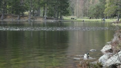 Duck swimming and people walking in the forest Stock Footage