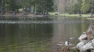 Stock Video Footage of Duck swimming and people walking in the forest