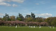 People playing a cricket match in the park Stock Footage