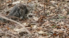 Feral Kitty - Bad Smell Stock Footage