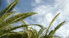 Nice Weather under Palm Trees Timelapse Stock Footage
