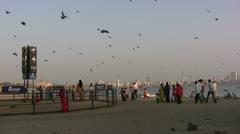 Pigeon feeding ground at Mumbai beach Stock Footage