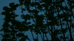 Branches And Leaves at Blue Hour pt3 (blue) Stock Footage