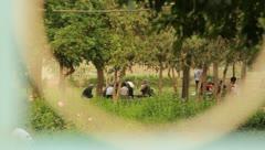People talking in garden viewed through gate holes (HD) c Stock Footage