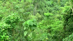 Rainforest Jungle Ambience with Audio - stock footage