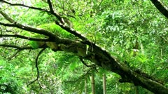 Tropical Rainforest with Audio - stock footage