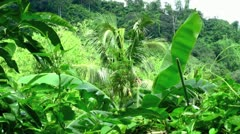 Rainforest Ambience with Audio - stock footage