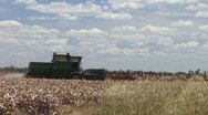 Stock Video Footage of Harvesting sorghum QLD 7 1