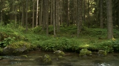Stream water in forest Stock Footage