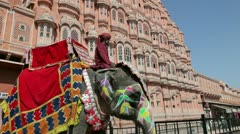 Ceremonial decorated Elephant, Palace of the Winds, India - stock footage