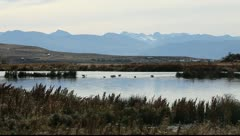 Landscape at El Calafate with flamingos, Stock Footage