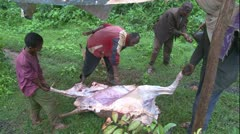 African men butcher cow on the ground WS - stock footage