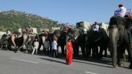 Stock Video Footage of Elephants waiting to carry tourists, Jaipur, India