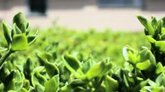 Plants with bugs flying around Stock Footage
