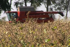 Soybean Harvest Stock Footage