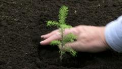 Planting tree seedling 01 - stock footage