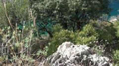 Vegetation on scarp slope Stock Footage