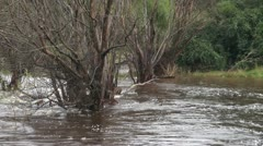 Flood- Uringalla Creek NSW Stock Footage