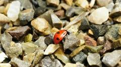 Lady`s beetle Stock Footage