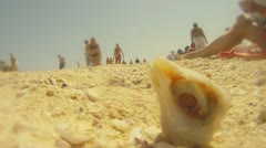 Creeps out of seashells cancer at the beach Stock Footage