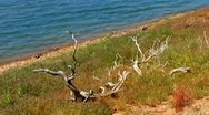 Stock Video Footage of Driftwood On Shore Of Lake In Summer