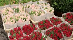 tulips for sale at amsterdam flower market - stock footage