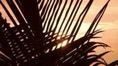 Palma in the sun at sunset Stock Footage