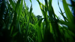 Wild grass and nettle under blue sky with clouds Stock Footage