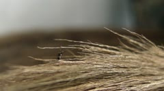 Mosquito Rests on a Broom Stock Footage