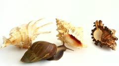 Giant snail and shells Stock Footage