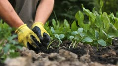 Planting in the garden Stock Footage