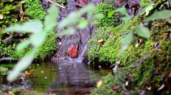Small Waterfall in the Jungle Stock Footage