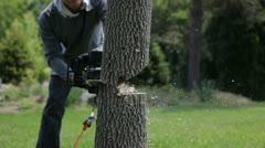 Chop Tree With A Chainsaw Stock Footage