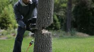 Stock Video Footage of Chop Tree With A Chainsaw