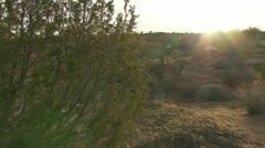 Sonoran Desert Creosote Sun Flare Walkabout Stock Footage