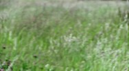 Out of Focus Looping Grass Stock Footage