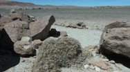 Stock Video Footage of Chile Atacama rock furry with cactus 10
