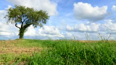 Tree in Field Timelapse Dolly Stock Footage
