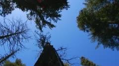 POV Walking Thru Sequoia Tree Tunnel At Calaveras Big Trees State Park Stock Footage