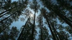 Georgia Pines Stock Footage