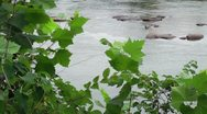 Stock Video Footage of hd view through foliage of river