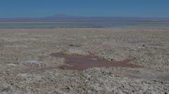 Chile Atacama Laguna Chaxa maroon puddle 1 Stock Footage