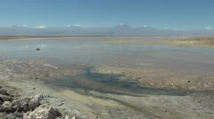 Chile Atacama Laguna Chaxa mud paddies 14 Stock Footage