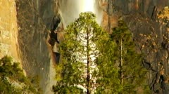 Yosemite Sentinel Falls Behind Pine Tree Close Up Stock Footage